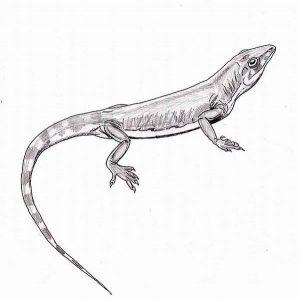 dibujo de lagarto