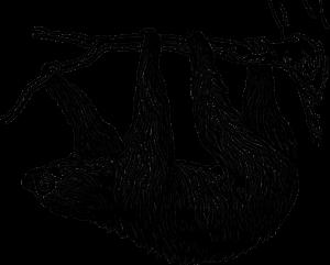 dibujo perezoso blanco y negro