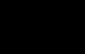erizo negro