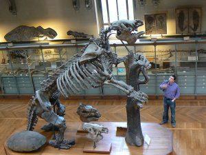 fosil perezoso gigante