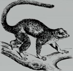 lemures dibujos