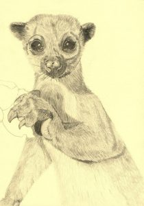 lemures en dibujos