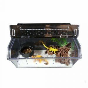 terrario para lagartos